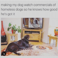 Boy you're already in the arms of an angel @cheesewineandpineapple: making my dog watch commercials of  homeless dogs so he knows how good  he's got it  A org  ASPCA 888 514 4443 Boy you're already in the arms of an angel @cheesewineandpineapple
