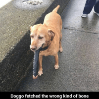 Bruhh 💀💀-➡️Tag A Friend-➡️Turn On Post Notifications: Doggo fetched the wrong kind of bone Bruhh 💀💀-➡️Tag A Friend-➡️Turn On Post Notifications