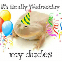 It is time my dudes: Its finally Wednesday  my dudes It is time my dudes