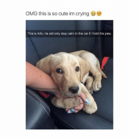 baby: OMG this is so cute im crying  This is Arlo, he will only stay calm in the car if l hold his paw. baby