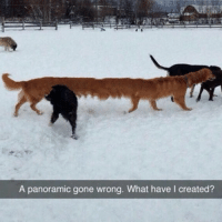 Long doggo: A panoramic gone wrong. What have l created? Long doggo