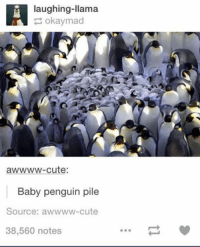 Funny Llama Pictures: laughing-llama  okaymad  awwww-cute:  Baby penguin pile  Source: a wwww-cute  38,560 notes