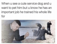 When u see a cute service dog and u  want to pet him but u know he has an  important job he trained his whole life  for >.<
