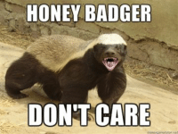 New meme: HONEY BADGER  DONT CARE New meme