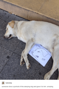 Dogs, Amaz, and Sleeping: babelady  someone drew a portrait of this sleeping dog and gave it to him. amazing.
