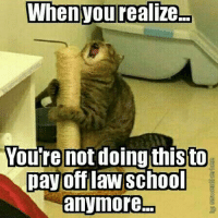 Life Feline Hard?: When you realize  Youre not doing this to  pay off law School  anymore Life Feline Hard?
