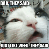 Not Even Once: DAB, THEY SAID  JUST LIKE WEED, THEY SAID Not Even Once