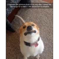 """Dogs, Sister, Sister, and Excite: l captured this glorious photo of my dog after l asked her,  """"Wanna go for a walk?!"""" Her excitement is palpable. Follow our chosen big sister for her wisdom and awesome quotes!! @25park laughs and good times! 🌙"""