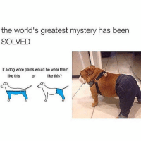 It's about damn time.: the world's greatest mystery has been  SOLVED  If a dog wore pants would he wear them  like this?  like this  or It's about damn time.