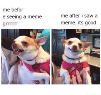 spicy chihuahua: me befor  e seeing a meme  me after i saw a  meme. its good spicy chihuahua