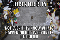"""Leicester City were the elephant climbing the tree. Now they're the """"Obliviously happy Puppy"""": LEICESTER CITY  NOT EVEN THEY KNOW WHATS  HAPPENING BUT EVERYONE IS  DELIGHTED  DOWNLOAD MEME GENERATOR FROM HTTP MEMECRUNCHCOM Leicester City were the elephant climbing the tree. Now they're the """"Obliviously happy Puppy"""""""