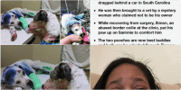 "Cars, Comfortable, and Dogs: Pawwwww! Dog who was shot in  head, dragged behind car, and left  for dead is comforted by another  abused pooch at the vet and now  they're inseparable  By Kiri Blakeley For Dailymail.com  00:37 07 May 2016, updated 19:07 07 May 2016  I O   Sammie, a 4-month-old boxer pup, was  shot in the head, spray painted blue, and  dragged behind a car in South Carolina  He was then brought to a vet by a mystery  Woman who claimed not to be his owner  While recovering from surgery, Simon, an  abused border collie at the clinic, put his  paw up on Sammie to comfort him  The two pooches are now best buddies  and both can be adopted through Rescue  Dogs Rock NYC when they are healed   Rescue Dogs Rock NYC Facebook  ""I'm here for you': Simon the border collie comforts  Sammie, 4 months, who was shot in the head, after  his successful surgery"