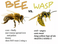 PLZ REMEMBER THAT NOW THAT IT'S WARM OUR LIL BEE FRIENDS WANNA HANG OUT IN THE SUN 2 PLZ BE CAREFUL AND PROTECT THEM: WASP  VS.  -cute fluffy  -evil angry  -just wanna spread love  -eats meat  and pollen  -long yellow legs of sin  -honey  WANTS 2 STING U  -does NOT want 2 sting u PLZ REMEMBER THAT NOW THAT IT'S WARM OUR LIL BEE FRIENDS WANNA HANG OUT IN THE SUN 2 PLZ BE CAREFUL AND PROTECT THEM