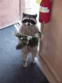 excuse me, i think you left your cat outside