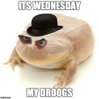 It is Wednesday my droogs: tingipcom  ITS WEDNESDAY  MY DRDOGS It is Wednesday my droogs