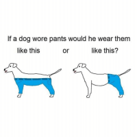 This is really fucking me up right now.: If a dog wore pants would he wear them  like this  like this?  or This is really fucking me up right now.
