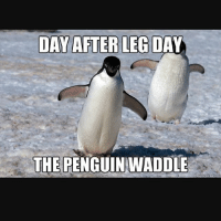 Do the penguin waddle!: DAY AFTER LEG DAY  THE  PENGUIN WADDLE Do the penguin waddle!