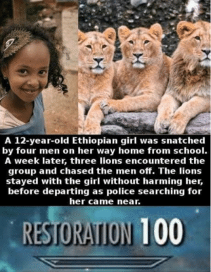 Police, School, and Girl: A 12-year-old Ethiopian girl was snatched  by four men on her way home from school.  A week later, three lions encountered the  group and chased the men off. The lions  stayed with the girl without harming her,  before departing as police searching for  her came near.  RESTORATION 100 This is wild