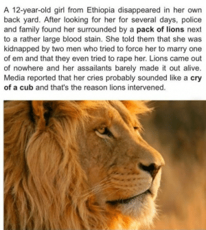 Alive, Family, and Police: A 12-year-old girl from Ethiopia disappeared in her own  back yard. After looking for her for several days, police  and family found her surrounded by a pack of lions next  to a rather large blood stain. She told them that she was  kidnapped by two men who tried to force her to marry one  of em and that they even tried to rape her. Lions came out  of nowhere and her assailants barely made it out alive.  Media reported that her cries probably sounded like a cry  of a cub and that's the reason lions intervened. kaminas-spirit:  lolshtus:  Lions Save Kidnapped Girl  if lions are coming to rescue someone, you have to know what you're doing is wrong. you know, in that moment before you're torn in to tiny little pieces by said lions