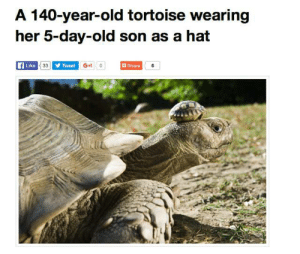 maliciaous:  *slams fists on table* THIS IS THE CONTENT I'M HERE FOR : A 140-year-old tortoise wearing  her 5-day-old son as a hat  Like  Tweet  G+1 0  Share  iu maliciaous:  *slams fists on table* THIS IS THE CONTENT I'M HERE FOR