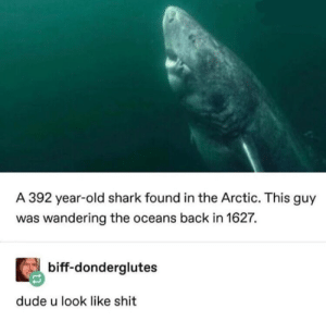 Dude, Memes, and Shit: A 392 year-old shark found in the Arctic. This guy  was wandering the oceans back in 1627.  biff-donderglutes  dude u look like shit
