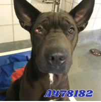 Dogs, Food, and Memes: A 78182 Email Placement@sanantoniopetsalive.org if you are interested in Adopting, Fostering, or Rescuing!  Our shelter is open from 11AM-7PM Mon -Fri, 11AM-5PM Sat and Sun.  Urgent Pets are at Animal Care Services/151 Campus. SAPA! is Only in Bldg 1 GO TO SAPA BLDG 1 & bring the Pet's ID! Address: 4710 Hwy. 151 San Antonio, Texas 78227 (Next Door to the San Antonio Food Bank on 151 Access Road)  **All Safe Dogs can be found in our Safe Album!** ---------------------------------------------------------------------------------------------------------- **SHORT TERM FOSTERS ARE NEEDED TO SAVE LIVES- email placement@sanantoniopetsalive.org if you are interested in being a temporary foster!!**