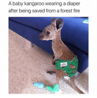 😍😍😍 (@dogsbeingbasic): A baby kangaroo wearing a diaper  after being saved from a forest fire 😍😍😍 (@dogsbeingbasic)