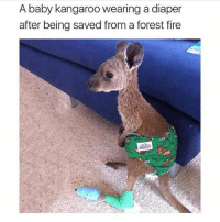 Poor baby😥 Comment your recent Emoji 5 times in row without being interrupted😆😜: A baby kangaroo wearing a diaper  after being saved from a forest fire Poor baby😥 Comment your recent Emoji 5 times in row without being interrupted😆😜