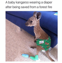 Fire, Memes, and Tag Someone: A baby kangaroo wearing a diaper  after being saved from a forest fire tag someone who needs to see this 😭😭 (@memes)