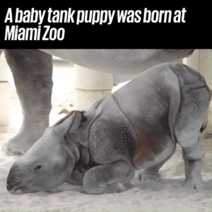 Dank, God, and Oh My God: A baby tank puppy was bornat  Miami Zoo Oh my god he's so adorable 😍😍