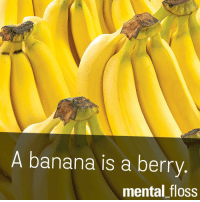 Banana: A banana is a berry  mental floss