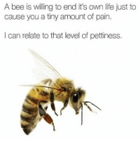 """Life, Memes, and Http: A bee is willing to end it's own life just to  cause you a tiny amount of pain.  I can relate to that level of pettiness. <p>Relatable via /r/memes <a href=""""http://ift.tt/2htZRY9"""">http://ift.tt/2htZRY9</a></p>"""