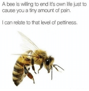 Life, Pain, and Bee: A bee is willing to end it's own life just to  cause you a tiny amount of pain.  I can relate to that level of pettiness. Tiny amount of pain is a lie