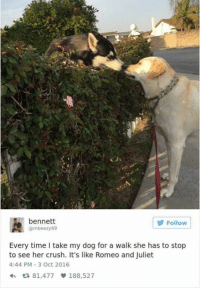Still a better love story than twilight ~Doggle: A bennett  Gmbeezy69  Follow  Every time I take my dog for a walk she has to stop  to see her crush. It's like Romeo and Juliet  4:44 PM 3 Oct 2016  81,477  v 188,527 Still a better love story than twilight ~Doggle