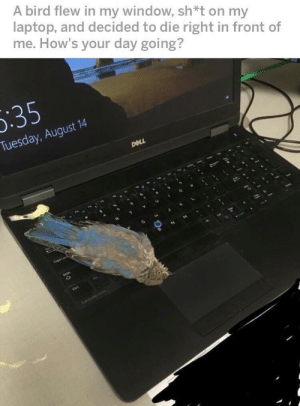 A thrilling saga: A bird flew in my window, sh*t on my  laptop, and decided to die right in front of  me. How's your day going?  5:35  Tuesday, August 14  DOLL  Coos Losh  Shift  Ctri  Latitude e A thrilling saga