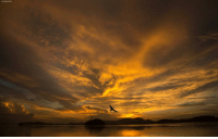 A bird flies over the river Brahmaputra at sunset in Gauhati, India, Sunday, Aug. 5, 2018. Brahmaputra is one of Asia's largest rivers, which passes through China's Tibet region, India and Bangladesh before converging into the Bay of Bengal.: A bird flies over the river Brahmaputra at sunset in Gauhati, India, Sunday, Aug. 5, 2018. Brahmaputra is one of Asia's largest rivers, which passes through China's Tibet region, India and Bangladesh before converging into the Bay of Bengal.