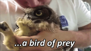 desperate-fallen-angel:  internetgf:  so seductive  THIS GETS ME EVERY FUCKING TIME : a bird of prey desperate-fallen-angel:  internetgf:  so seductive  THIS GETS ME EVERY FUCKING TIME