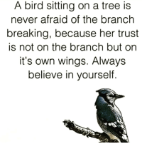 always believe in yourself and stay positive✌ tag someone follow this page👇👇👇 @psychicadriana hello Check out 🖕my page 💫I am a down-to-earth spiritual healer. Searching for an effective way to relieve your pain ? Need support in healing ? Specializing in guided meditation, chakra balancing, and crystal healing💫 ♨♨♨♨♨♨♨♨♨ Positiveresult positive positivequotes positivity life motivation motivational love lovequotes relationship lover hug heart quotes positivequote positivevibes kiss king soulmate girl boy friendship dream inspire inspiration partner psychiadriana chakra heal soul: A bird sitting on a tree is  never afraid of the branch  breaking, because her trust  is not on the branch but on  it's own wings. Always  believe in yourself always believe in yourself and stay positive✌ tag someone follow this page👇👇👇 @psychicadriana hello Check out 🖕my page 💫I am a down-to-earth spiritual healer. Searching for an effective way to relieve your pain ? Need support in healing ? Specializing in guided meditation, chakra balancing, and crystal healing💫 ♨♨♨♨♨♨♨♨♨ Positiveresult positive positivequotes positivity life motivation motivational love lovequotes relationship lover hug heart quotes positivequote positivevibes kiss king soulmate girl boy friendship dream inspire inspiration partner psychiadriana chakra heal soul