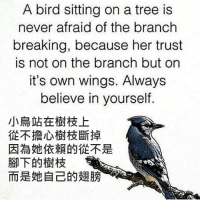 International, 梗圖, and Own: A bird sitting on a tree is  never afraid of the branch  breaking, because her trust  is not on the branch but on  it's own wings. Always  believe in yourself. 【心靈雞湯】