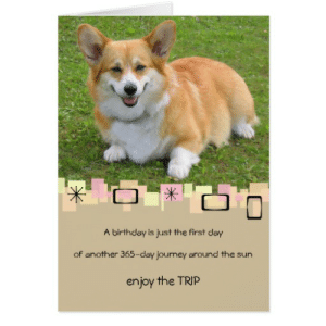 corgi lawyer meme - 28 images - lawyer yes memes, corgia on corgis ...: A birthday is just the first day  of another 365-day journey around the sun  enjoy the TRIP corgi lawyer meme - 28 images - lawyer yes memes, corgia on corgis ...
