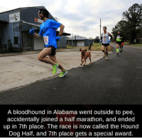 hound dogs: A bloodhound in Alabama went outside to pee,  accidentally joined a half marathon, and ended  up in 7th place. The race is now called the Hound  Dog Half, and 7th place gets a special award.
