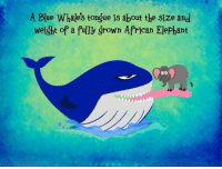 Memes, Elephant, and Elephants: A Blue Whales tongue is about the size and  weight of a fully grown African Elephant https://t.co/RFo0K3614r