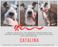 Beautiful, Benadryl, and Children: A BRAVE,BEAUTIFUL, BIG HEARTED,SUPER SWEET GIRL  SUFFERS FROM NEGLECT&DREAMS OF A FAMILY WHO WILL  LOVE HER FOREVER...  CATALINA  ld 53717,  6 Yrs. Young, 55 lbs. of Gentle. Waiting with Hope, at the Brooklyn ACC TO BE KILLED 1/18/19  *** NEEDS PLACEMENT *** Cutie Catalina! Social With Dogs, Gentle & Shyly Sweet, Needs Follow Up Vet Care for Pyoderma & Heart Murmur!  Brave and beautiful, CATALINA's life has been one of neglect and hope. Hope that someday she would find the happiness she has always longed for, and the dream of a family who would care for her, cherish her, and never let her go. Instead, she has itchy, burning skin, patchy fur, and because of the severity of the skin infection, her mushy face and paws are actually a reflection of her skin issue – swollen and uncomfortable. Imagine being in such a state, and for who knows how long, but still she remains gentle and sweet as can be, so happy for company, a kind word, and the love of the volunteers. Catalina is compromised due to her skin, and it won't be long before she gets the dreaded shelter cold and ends up on the list to die. This middle aged lady deserves better – she deserves to see a dermatologist, she deserves a soft bed, and more than anything else, she deserves the dream of her forever family to come true. Please save her life….hurry and Message our page right now or email us at MustLoveDogsNYC@gmail.com right now for assistance fostering or adopting her.  MY VIDEO https://youtu.be/Y3KveMq1zIg  CATALINA, ID # 51737, @ 6 Yrs. Old, 55.25 lbs. Brooklyn ACC, Large Mixed Breed, Gray Brown / White, Unaltered Female I came into the shelter as a stray on 11-Jan-2019.   OWNER SURRENDER NOTES - BASIC INFORMATION: Catalina is a brown and white female dog that was brought to the center as a stray.  INTAKE NOTES - DATE OF INTAKE, 1/3/2018: Catalina was shy throughout the process however she allowed to be collared and scanned. She was responding sit and stay cues and by goi