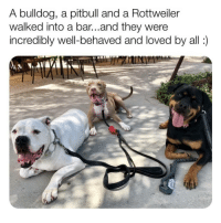 @drsmashlove is a must follow for all animal lovers!!: A bulldog, a pitbull and a Rottweiler  walked into a bar...and they were  incredibly well-behaved and loved by all: @drsmashlove is a must follow for all animal lovers!!