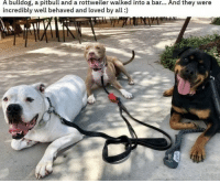 Bulldog: A bulldog, a pitbull and a rottweiler walked into a bar... And they were  incredibly well behaved and loved by all)