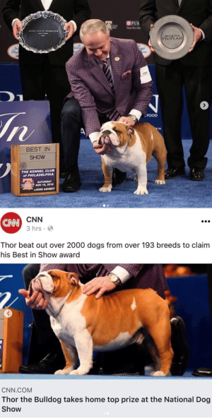 A bulldog takes best in show. Way to go Thor!Pup @mbis_mbiss_thor: A bulldog takes best in show. Way to go Thor!Pup @mbis_mbiss_thor