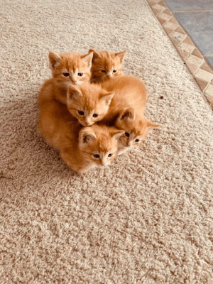 A bundle of gingers!: A bundle of gingers!