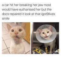 Precious, Smile, and Her: a car hit her breaking her jaw most  would have euthanised her but the  docs repaired it look at that igot9lives  smile <p>She's still kickin'! Look at that precious smile 😊</p>