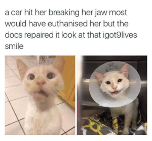 Precious, Smile, and Her: a car hit her breaking her jaw most  would have euthanised her but the  docs repaired it look at that igot9lives  smile  AELC She's still kickin'! Look at that precious smile
