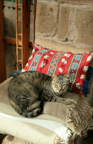 A cat about to enjoy a nap over a stack of Moroccan rugs, in Essaouira: A cat about to enjoy a nap over a stack of Moroccan rugs, in Essaouira